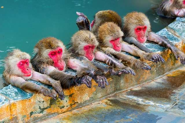 猿の群れが温泉に仲良くつかっている
